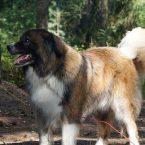 Quelles précautions prendre avec un chien au camping ?