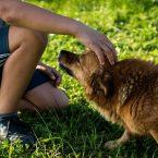 Un chien peut-il transmettre des maladies à un enfant ?