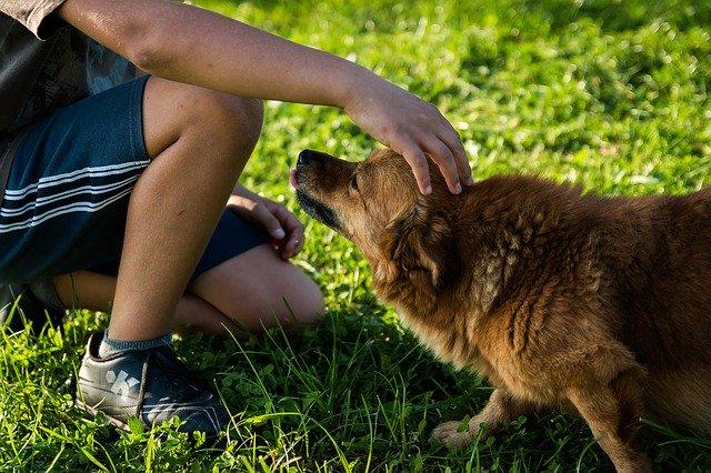chien caressé par un enfant