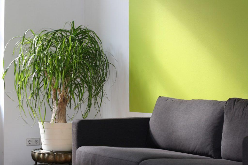 Canapé, gris en tissu disposé à côté d'une plante verte