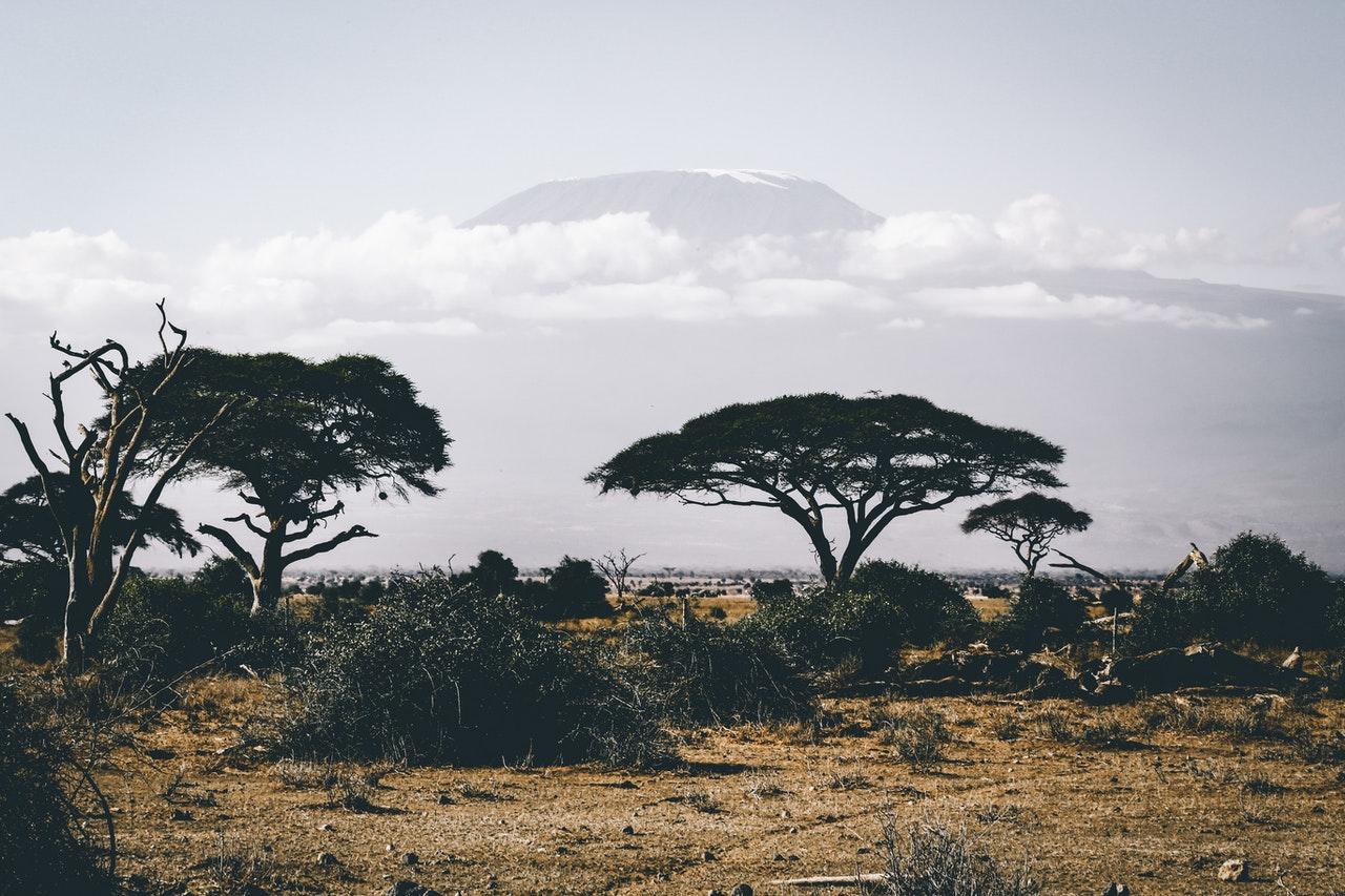 Paysage d'Afrique, savane arbre désert sécheresse