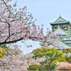Prénom de Fille Japonais- Liste des   793 Meilleurs Prénoms Japonais