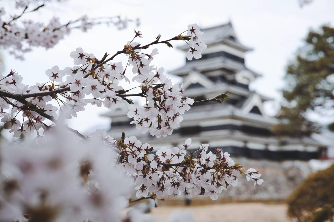 Japon Asie, cerisier blanc, temple palais
