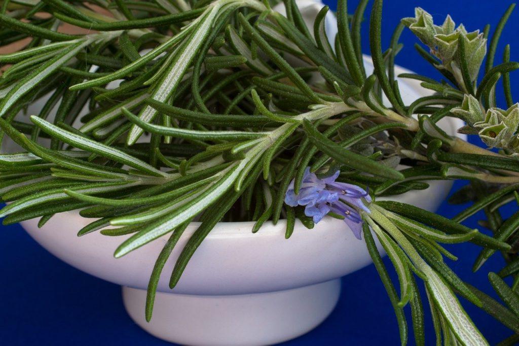 Petit pot avec des herbe, dont romarin