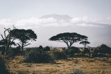 Prénom de Garçon Swahilie – Liste des 38 Meilleurs Prénom de Garçon Swahili
