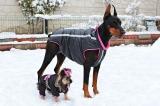 Les vêtements pour un chien, un choix difficile, comment faire ?